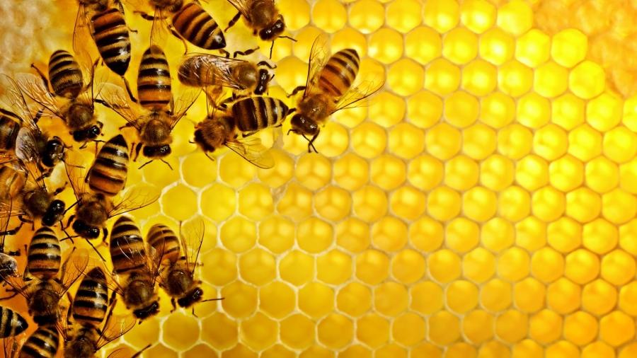 Cách bảo tồn ong mật bằng nito