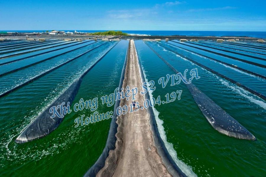 Nuôi trồng tảo biển bằng khí thải CO2